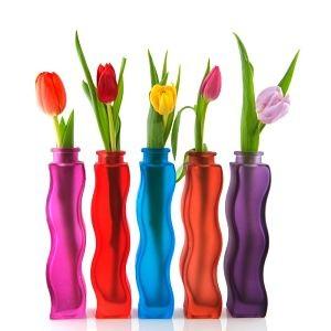 Tulips - Gratitude